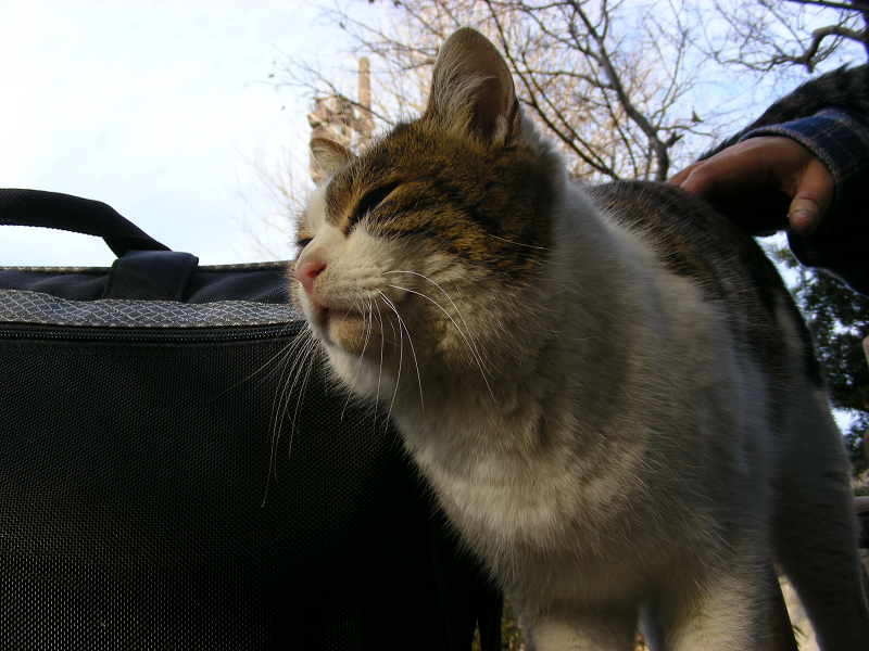 カメラバッグとキジ白猫2