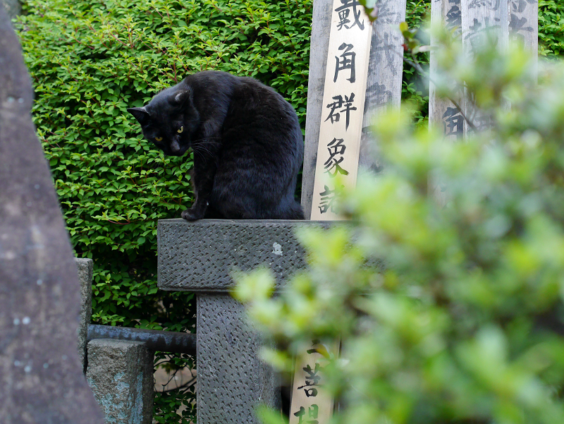 石碑に乗った黒猫1