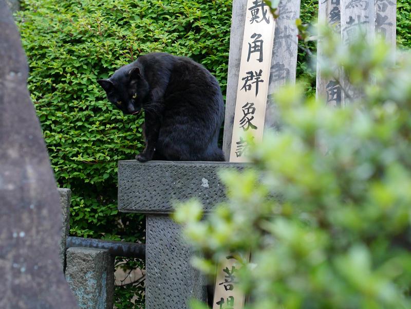 石碑に乗った黒猫2