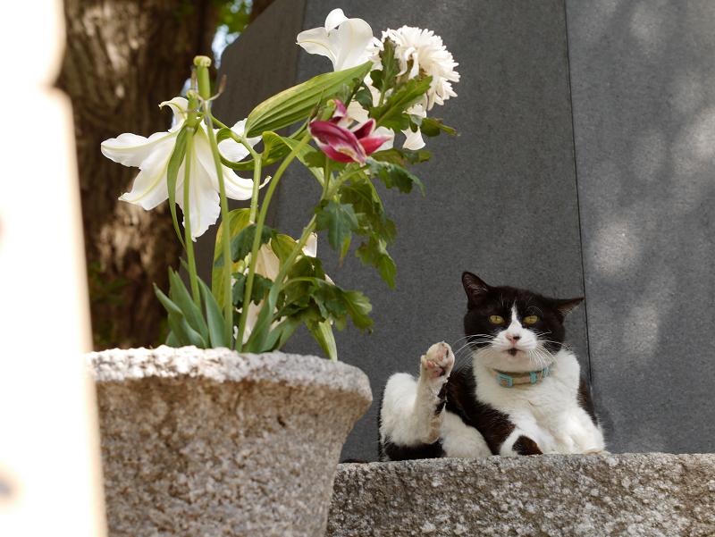 青空下で毛繕いの黒白猫3