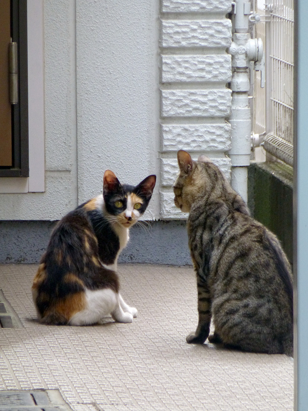 アパートの猫たち