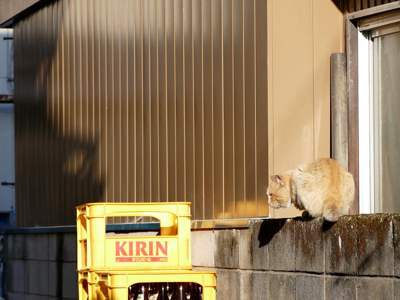 ブロック塀の茶白猫2