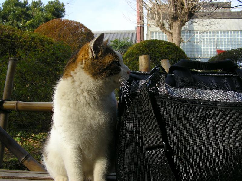 庭先ベンチとキジ白猫1