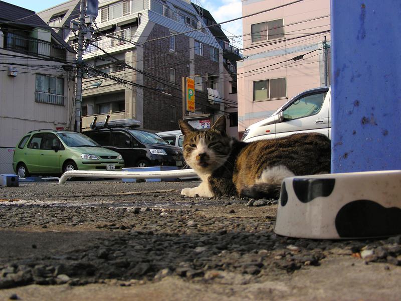 日当たりが良い駐車場のキジトラ猫1