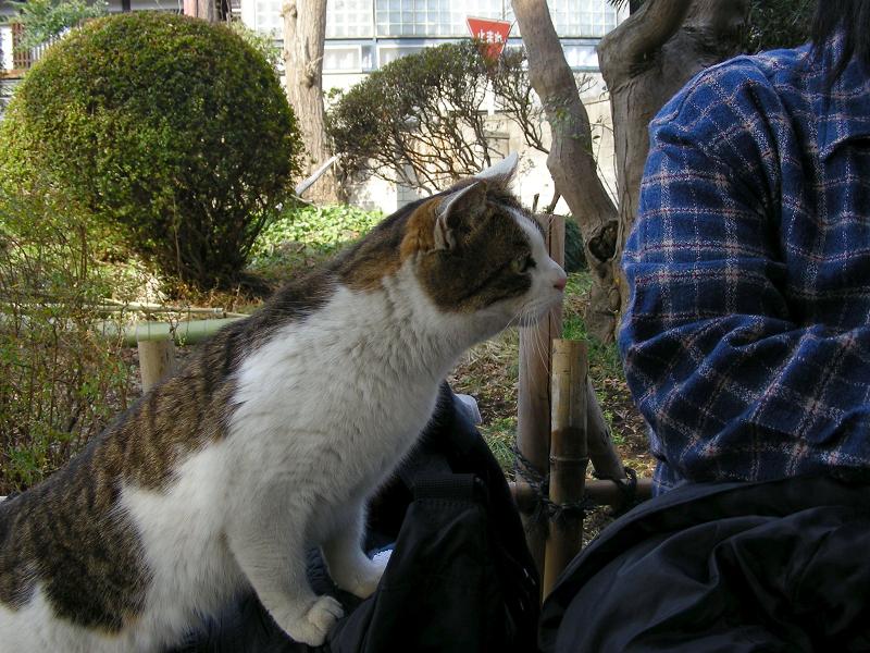 庭先ベンチとキジ白猫2