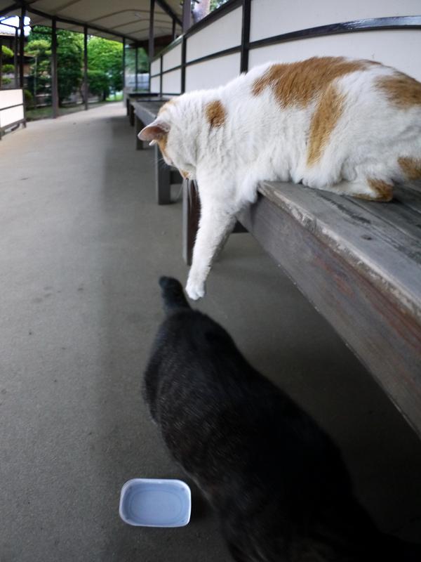 縁台上下の猫たち1