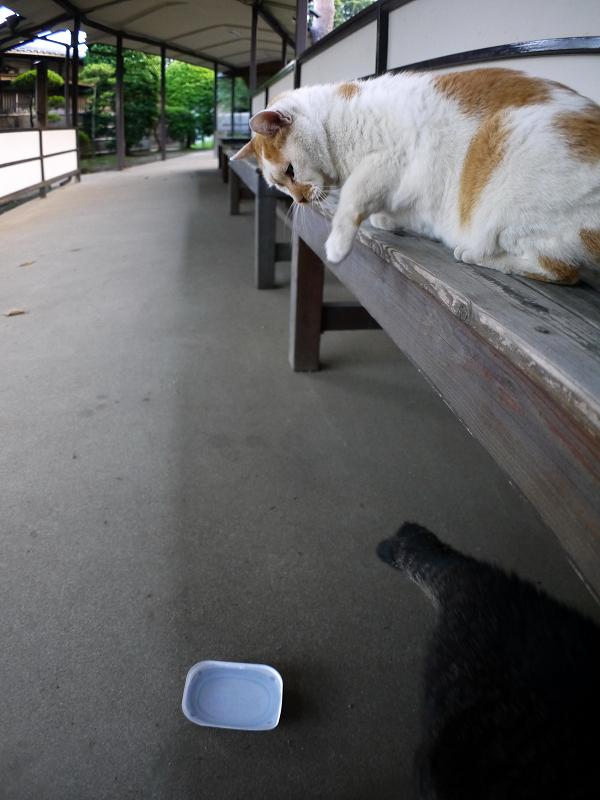 縁台上下の猫たち2
