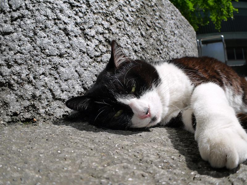 日差しの中で寝ちゃった黒白猫2