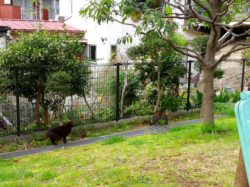 公園の黒猫とキジトラ猫1