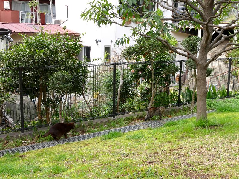 公園の黒猫とキジトラ猫2