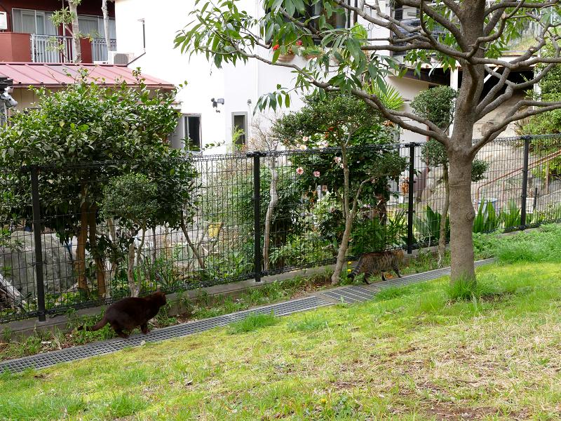 公園の黒猫とキジトラ猫3