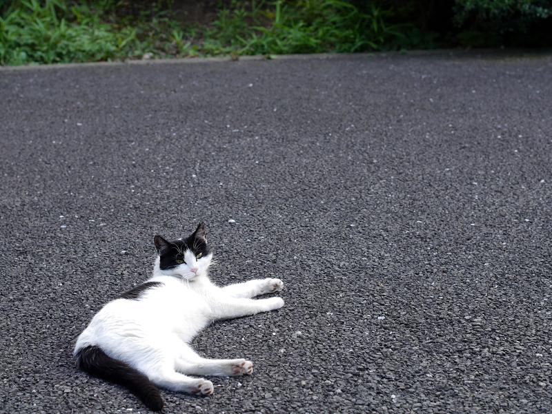 境内で寝ている白黒猫2