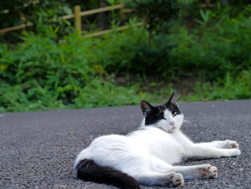 境内で寝ている白黒猫3
