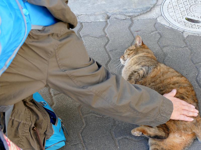 安心しきったキジトラ猫3