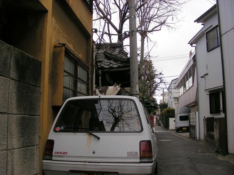 裏路地の猫たち1