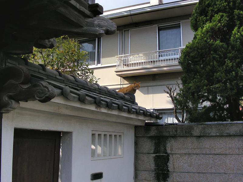 お寺の門瓦の茶トラ猫1