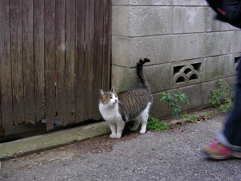 裏路地の猫たち2