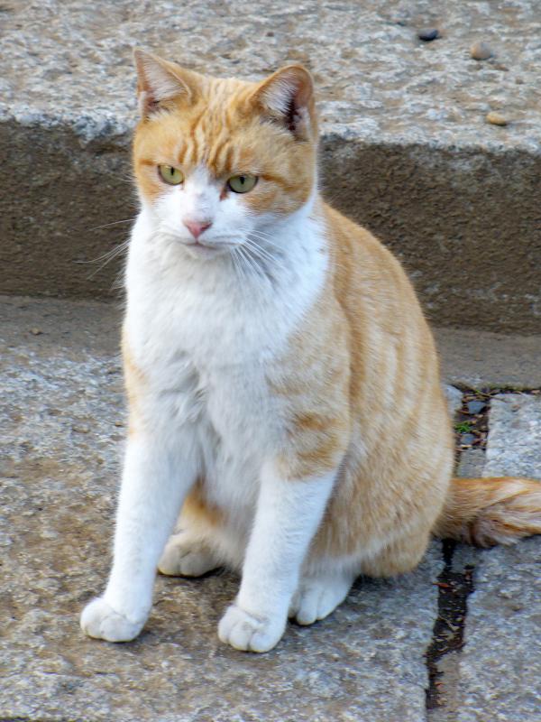 意外と若手の茶白猫2