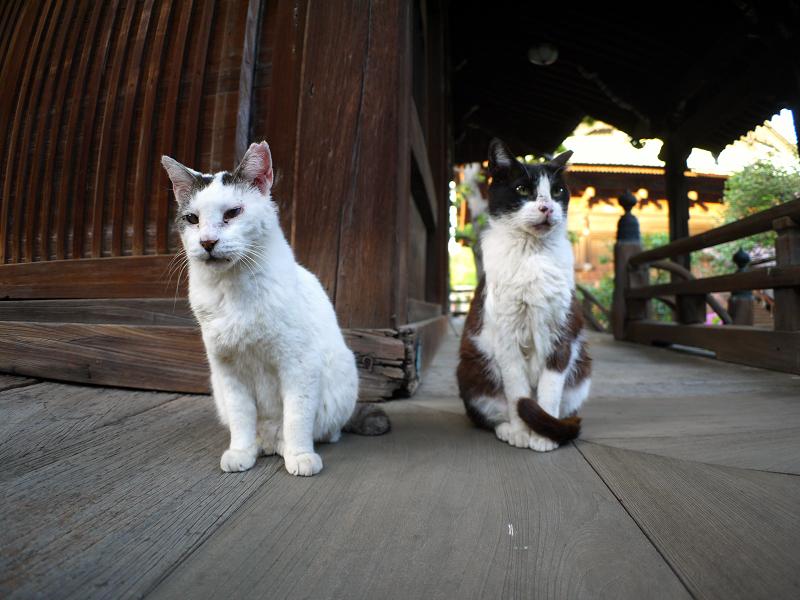 古堂濡れ縁の猫たち1