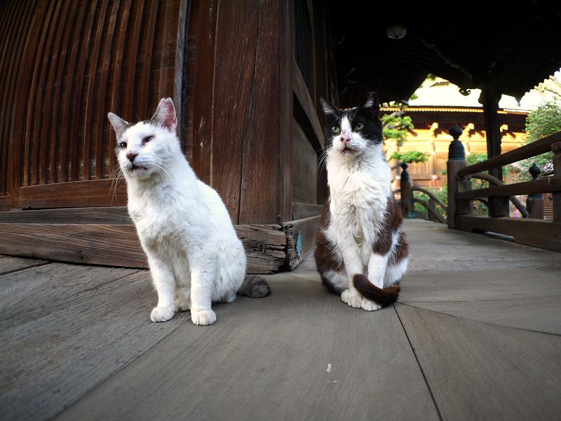古堂濡れ縁の猫たち2