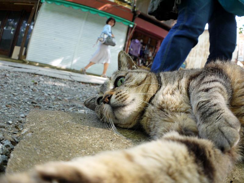 側溝の上で横になるキジトラ猫3
