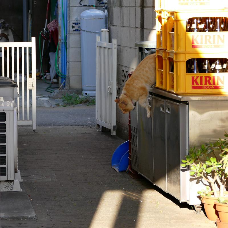 ブロック塀から降りてきた茶白猫2