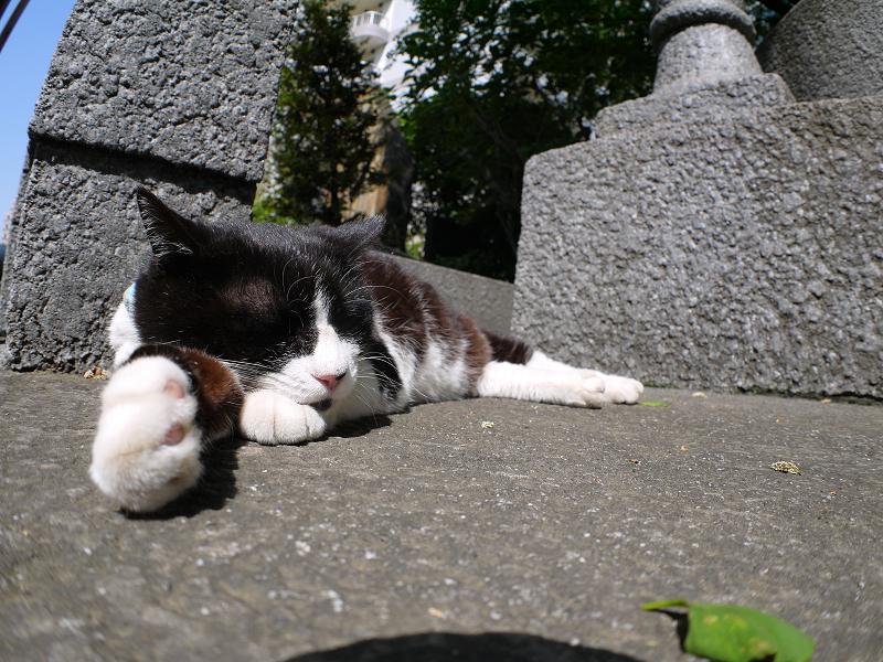 右手を伸ばして寝てる黒白猫1