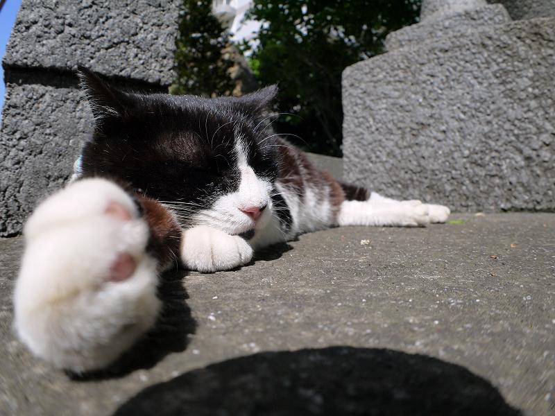 右手を伸ばして寝てる黒白猫2