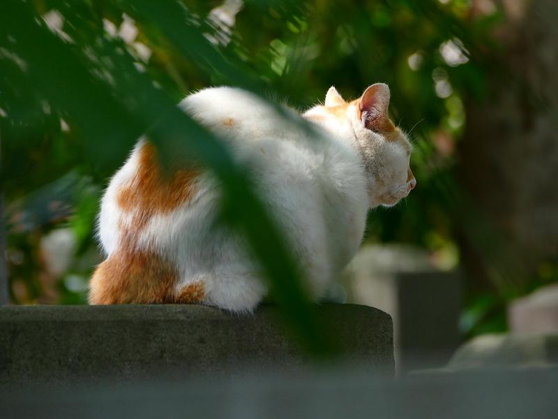 石碑に乗った白茶猫
