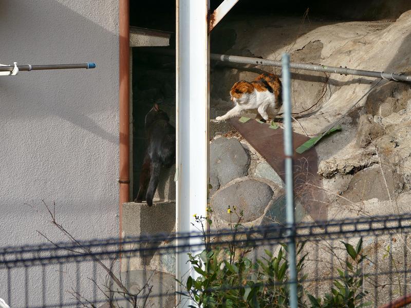 三毛猫と黒猫の出来事3
