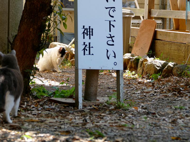神域のグレー白猫2