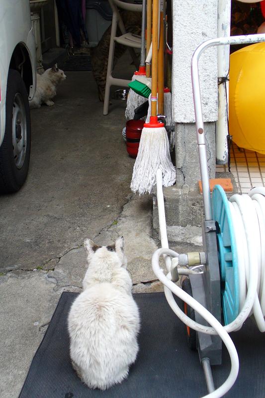 ボス猫『でぶち』1