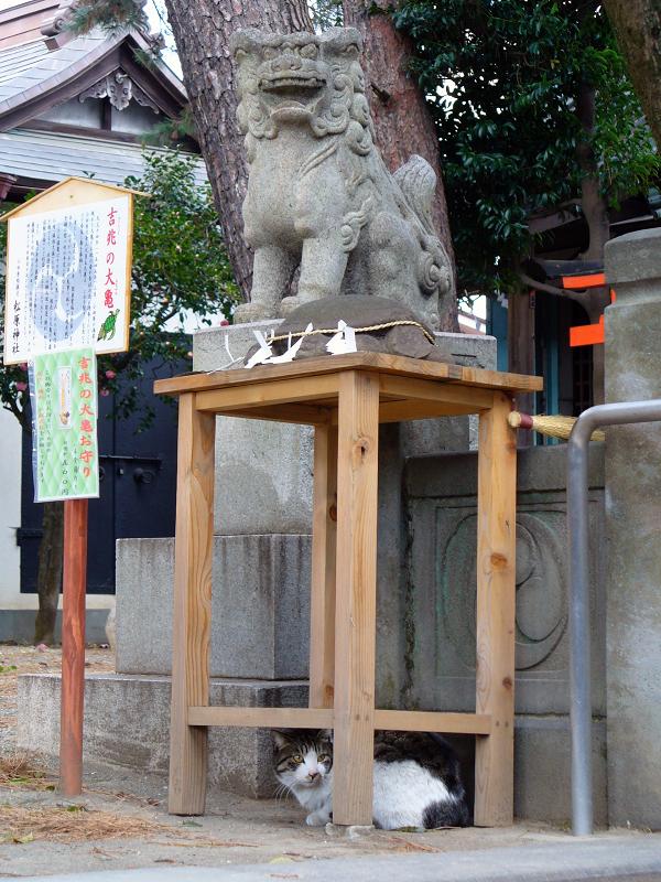 神社狛犬キジ白猫2