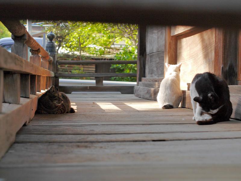 濡れ縁の猫たち1