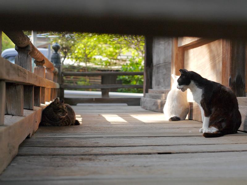 濡れ縁の猫たち2