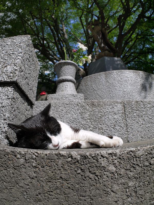 寝てる黒白猫のローアングル