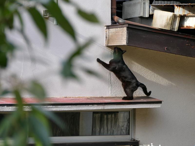 赤い庇の黒猫1