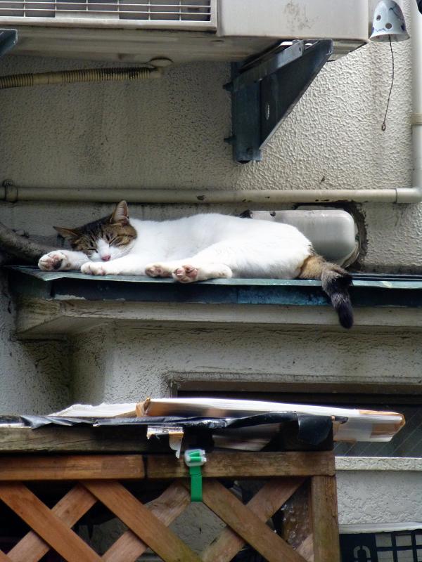室外機隙間と白キジ猫1