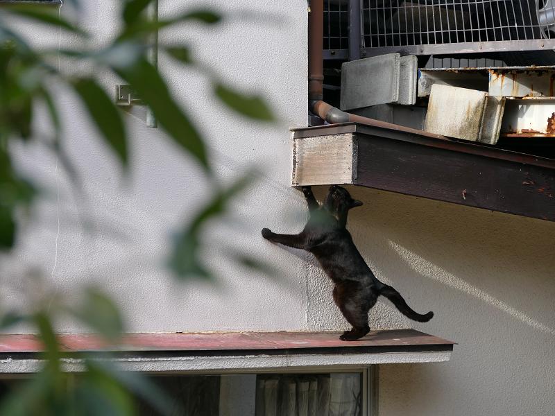 赤い庇の黒猫2