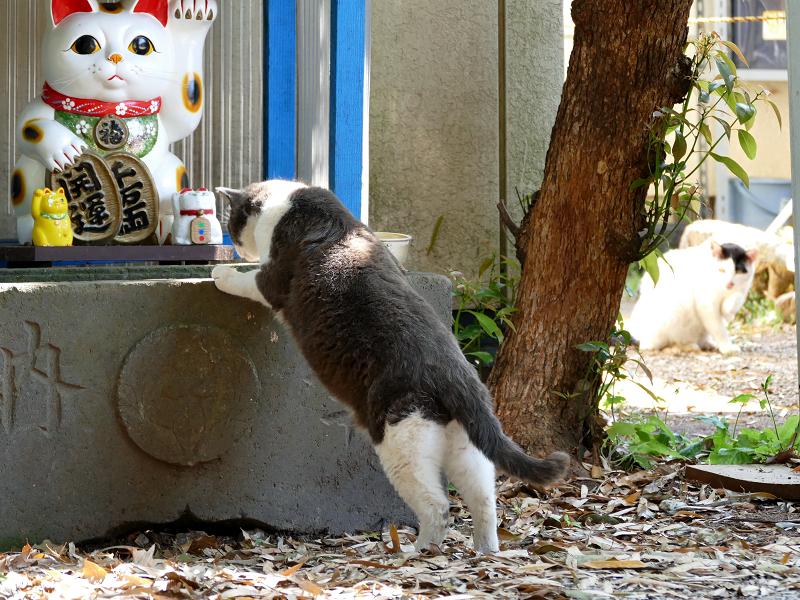 手水舎とグレー白猫2
