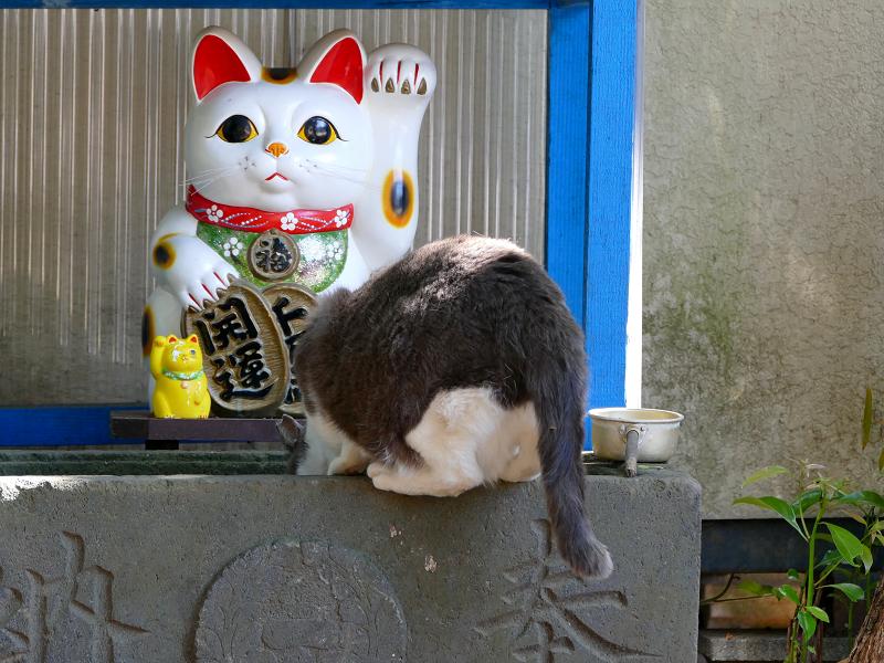 手水舎とグレー白猫3