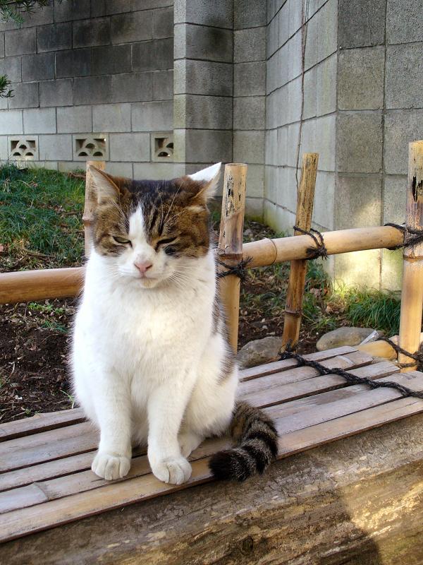 木製ベンチのキジ白猫