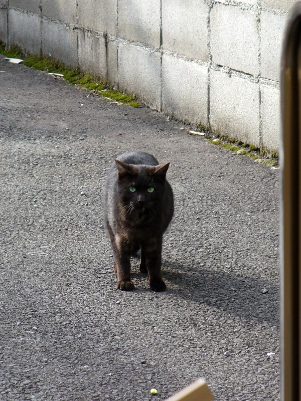 駐車場の黒猫2