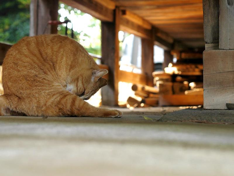 濡れ縁下の茶トラ猫2