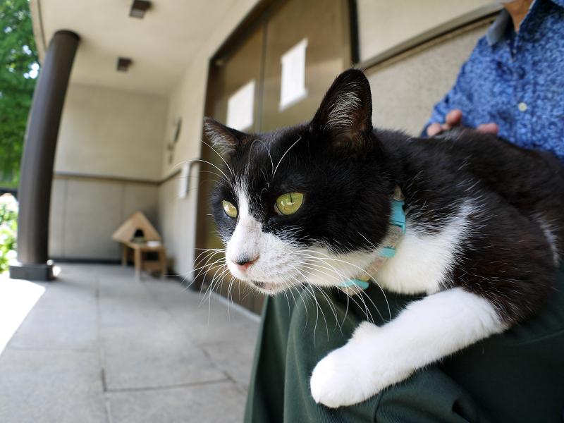 お堂前で膝に乗ってる黒白猫2