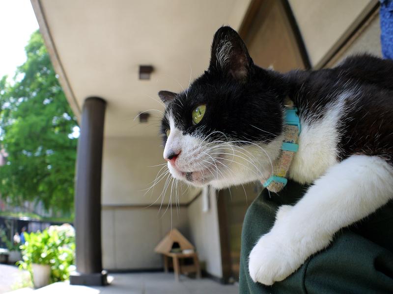 お堂前で膝に乗ってる黒白猫3