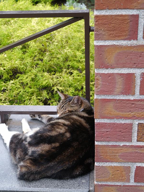 煉瓦支柱アメショー風猫1