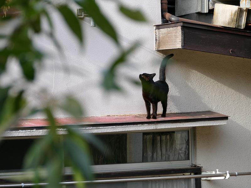 赤い庇上の黒猫1