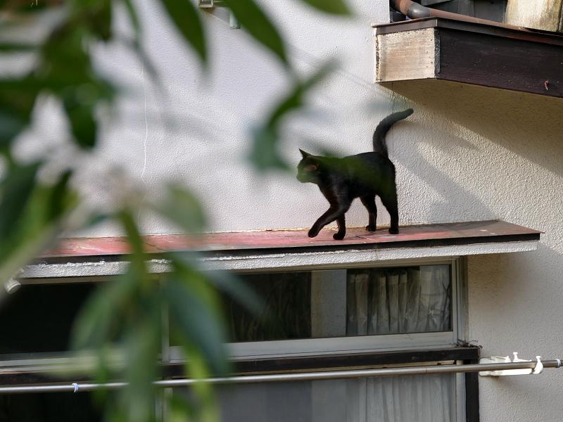 赤い庇上の黒猫2