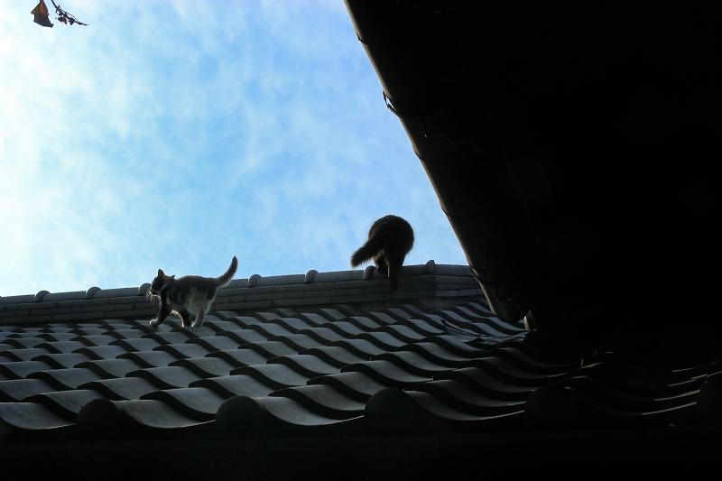青空と屋根の上の猫たち1